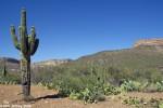Inevitable Saguaro shot