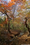 The Gill (Ramble) in Fall